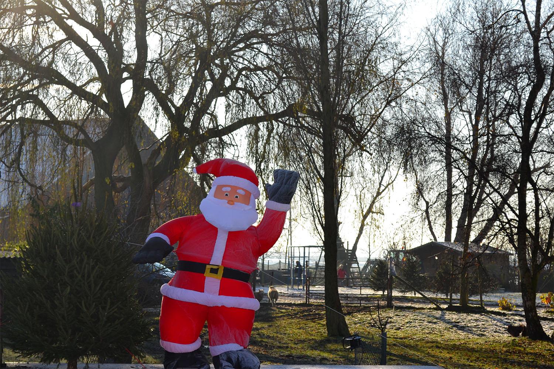 Nordmann Excellent kerstbomen Haarlem